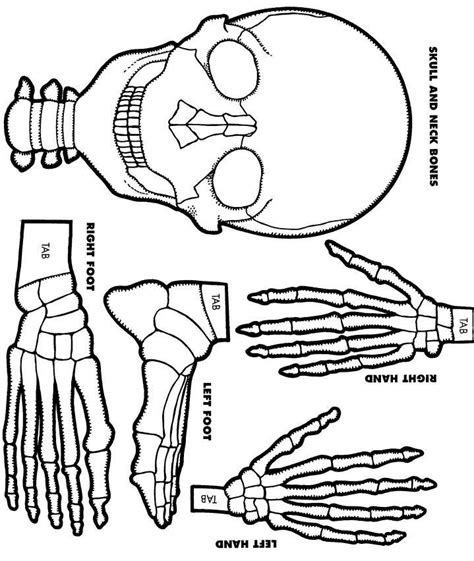 easy skeleton cut out template pictures to pin on