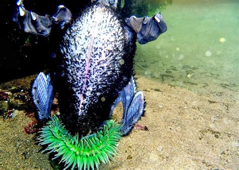 anemone eats bird and other surprising animal meals