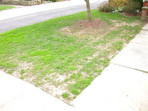 daycare columbus nature organic lawn care columbus columbus oh 43204 angies list