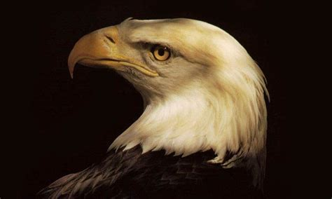 Lu Eagle Eye Mobil 800x480 popular mobile wallpapers free 44 800x480 ifreewallpaper
