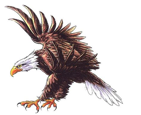 Our Country Drawing how to draw eagles eagles that fly across our