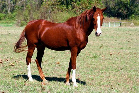 Sho Kuda Yang Kecil hal hal kecil kuda dan keunikannya