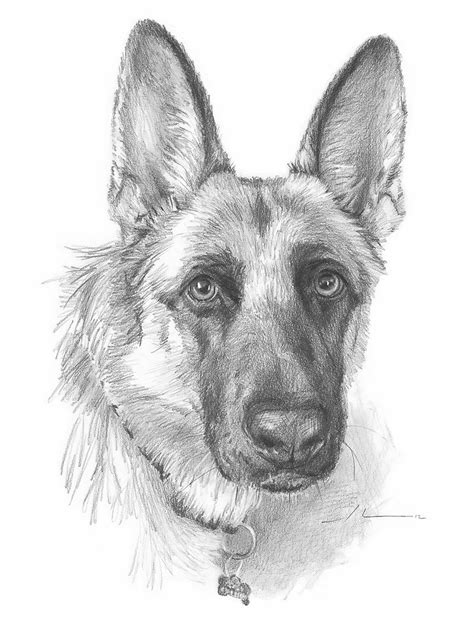 german shepherd drawing quot german shepherd drawing quot by mike theuer redbubble