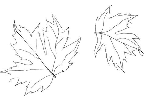 fall leaf coloring pages free coloring pages of autumn leaf