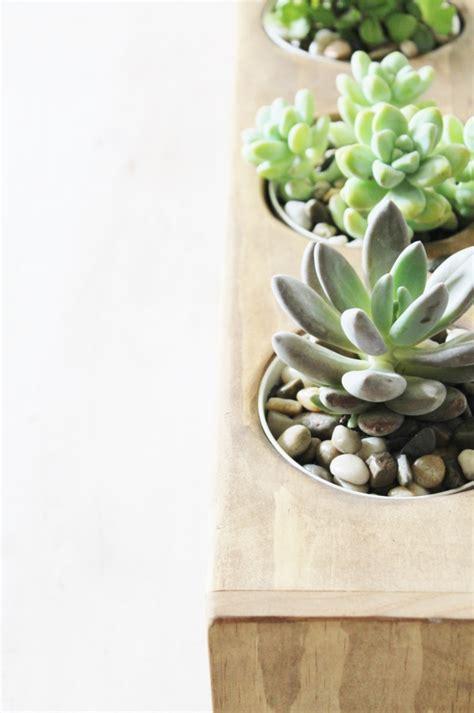 modern succulent planter modern succulent centerpiece planter with city farmhouse