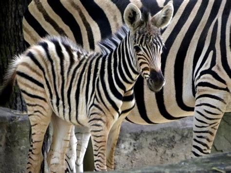 First Home Checklist baby zebra susan shain