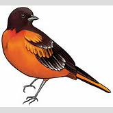 Black and Orange Bird PNG Clipart - Best WEB Clipart