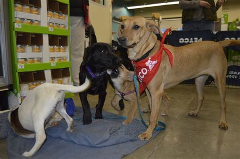 petco puppies sweetest rescue holding adoption events at petco in bridgehton bridgehton