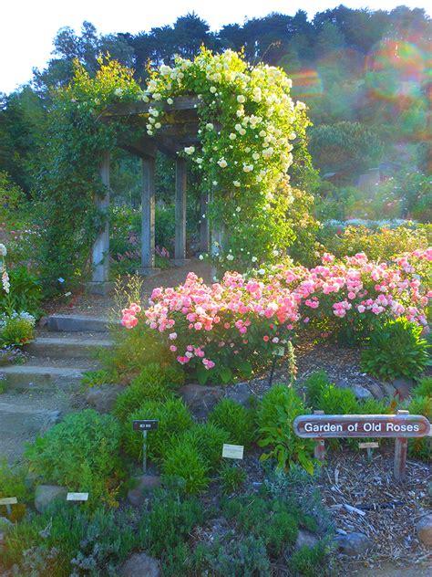 Berkeley Botanical Garden Hours Uc Botanical Garden Hours Tami Jim S Magical Uc Berkeley Botanical Gardens Ucr Botanical