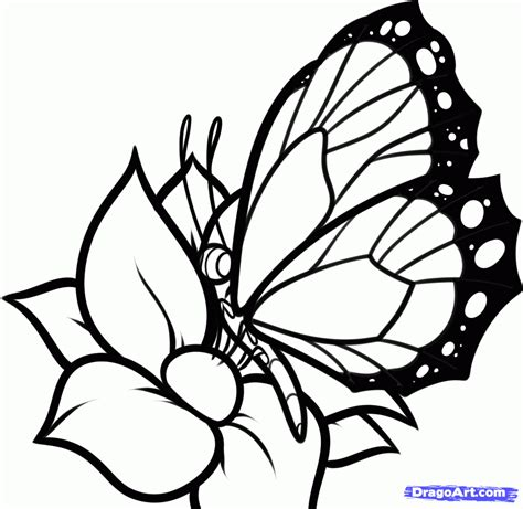 How To Draw A Butterfly On A Flower
