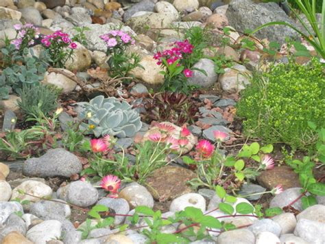 rockery plants 2 grows on you