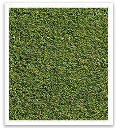santa ana couch grass santa ana couch sir walter instant lawn suppliessir