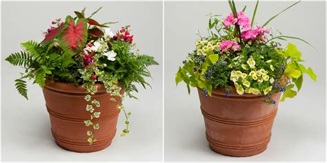 patio flower pots order your blooming plants for s day