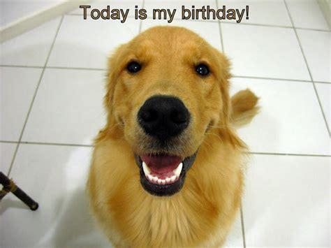 golden retriever happy birthday images displaying 20 images for happy birthday golden retriever breeds picture