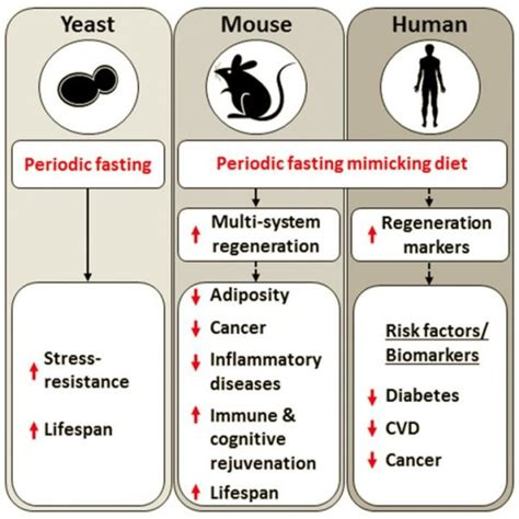 the longevity diet discover the new science stem cell activation and regeneration to aging fight disease and optimize weight books diet mimicking fasting promotes regeneration and longevity