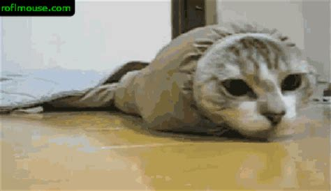 cat sock gif wpcontentuploads201107 gifs find on giphy