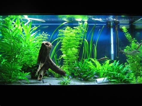 Tropical Aquarium Decorations by Fish Aquarium Decor Ideas Aquarium Design Ideas