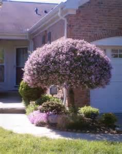 Curtains Too Short Purple And Lilacs Leaf Grain Leaf Grain