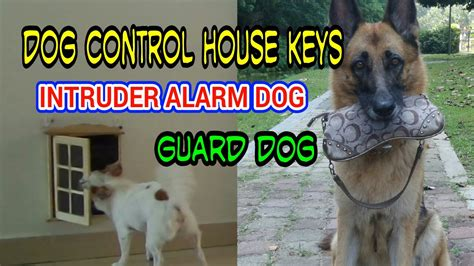 how to train dog to guard house how to teach a dog to fetch house keys train dog to guard and carry object intruder