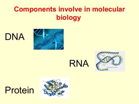 protein biology definition basics of molecular biology
