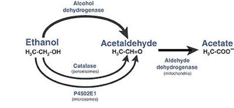Acetaldehyde Detox by Niaaa Publications