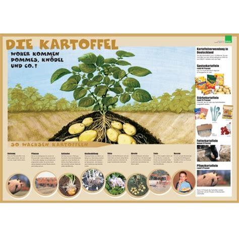 Beschriftung Kartoffelpflanze by Poster Kartoffel