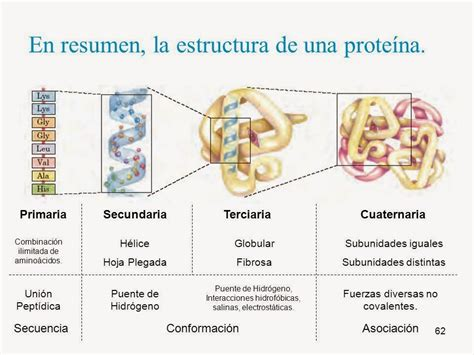 define cadena polipeptidica biologia2bachc 2 186 bachillerato tema 4 prote 205 nas