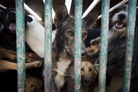 cani in gabbia per l fbi maltrattare gli animali 232 un reato grave lifegate