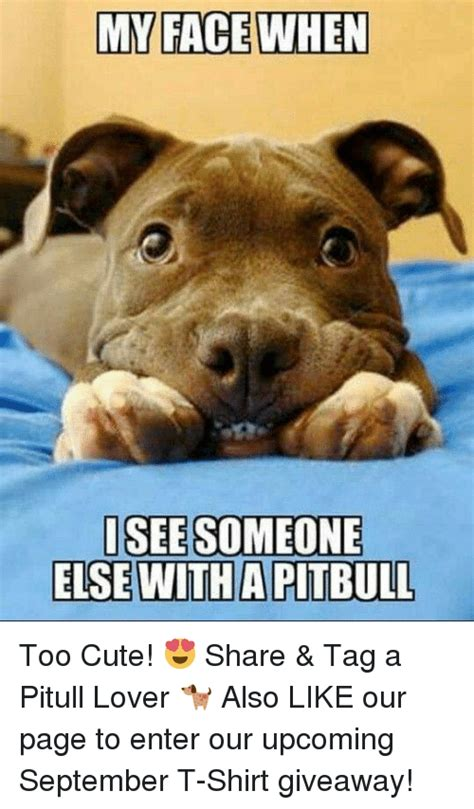 face  isee   witha pitbull  cute