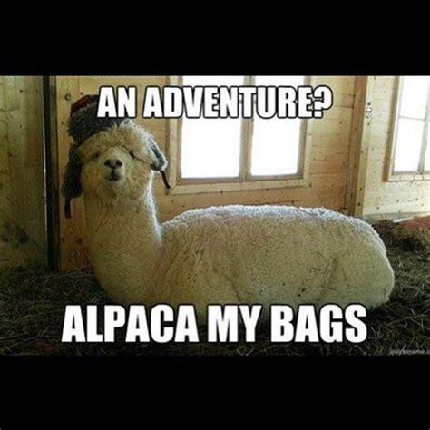Alpaca My Bags Meme - 31 best what makes us laugh images on pinterest dogs
