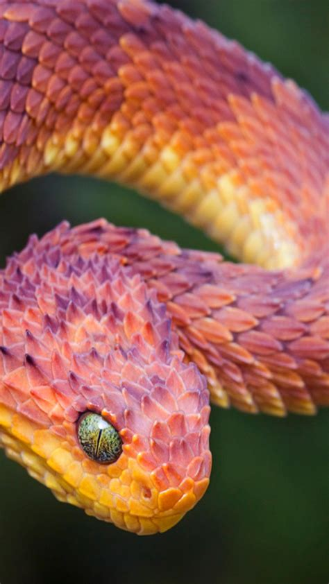imagenes asombrosas de serpientes fondos de serpientes para whatsapp im 225 genes wallpappers