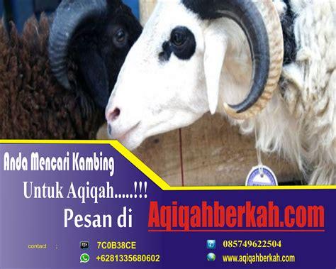 Aqiqah Kambing Jantan harga kambing aqiqah murah