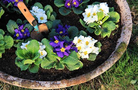 fiori da spedire spedire fiori a domicilio bergamo mazzola