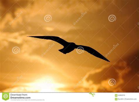 il volo gabbiano il volo gabbiano della siluetta sul cielo di tramonto