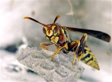 How To Make Paper Wasps - wasp the of animals