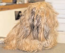 matted hair on your matted hair and