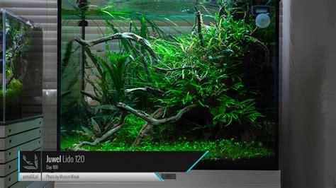 Aquascaping Inspiration Juwel Lido 120 Nouveau D 233 Part