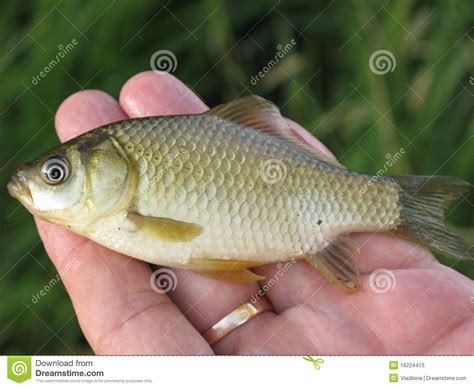 small images small fish on a stock photos image 16224413
