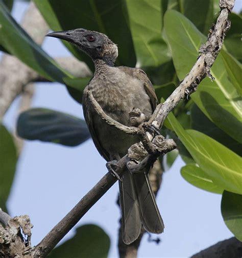 Jenis Burung Cucak Asli indonesia   Batu Akik Agate