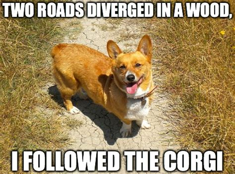 Funny Corgi Memes - 8 funny corgi memes what every dog deserves