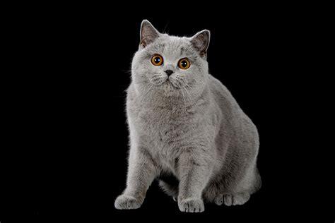 pasqua 2014 i gatti pi 217 belli mondo in expo a sanremo