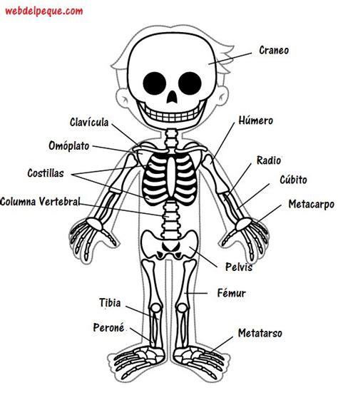 libro misin clash un esqueleto m 225 s de 25 ideas incre 237 bles sobre esqueleto humano en anatom 237 a esquel 233 tica anatom 237 a
