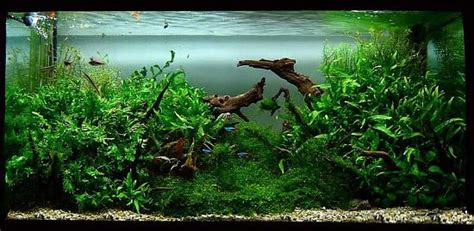 Driftwood Aquascape by Driftwood Inspiration Aquascaping Co