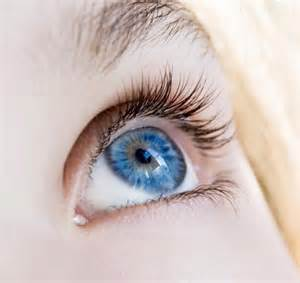 blue eye color blue eyed humans a single common ancestor