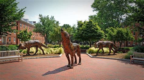 Nc State Mba Questions by Image Gallery Ncsu Cus