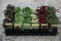 piante da esterno in vaso perenni cosa sono e come si mantengono le piante perenni antica