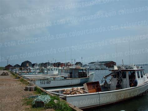 bay boats cheap malpeque bay lobster boats cheap stock photo