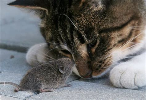 cat and mouse cat mouse a poem by haiku dragon all poetry