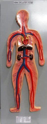como aser sistema circulatorio con materiales reciclables 17 best images about maquetas de los sistemas digestivo