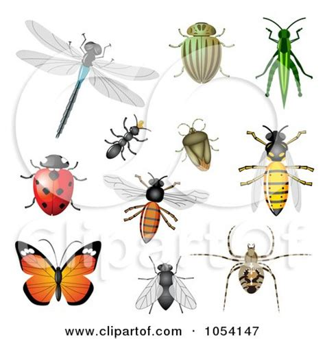 printable insect poster pin insect identification poster posters pictures prints